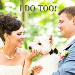 Morris Animal Inn's Pet Servic... is a Wedding Pros