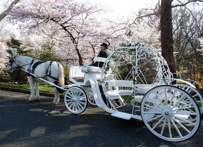 Dream Horse Carriage Company   Cinderella Carriages   NJ Weddings