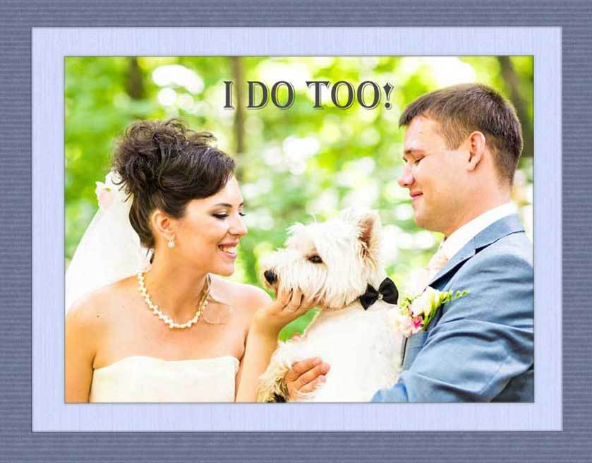 Morris Animal Inn Introduces New Wedding Services To Help Couples Include Dogs In Their Nuptials