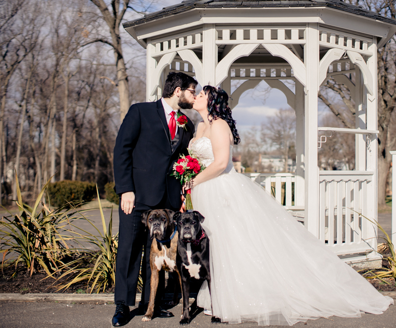 Pet Wedding Photos