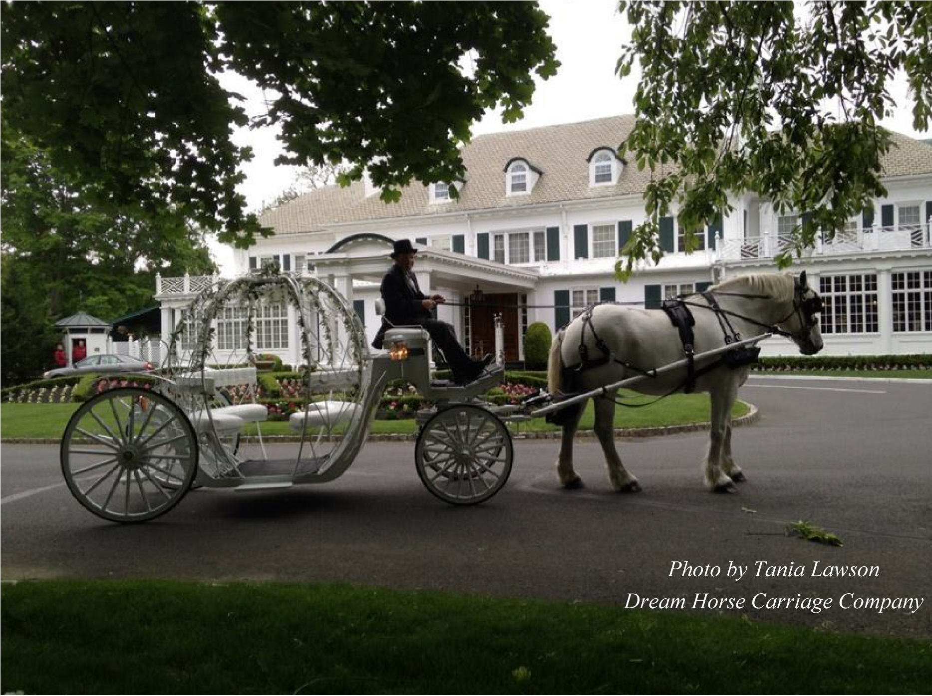 Dream Horse Carriage Endorsements From Wedding Pros